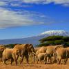 SAFARI Y PLAYA EN ÁFRICA