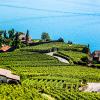 Descubra Suiza 2018