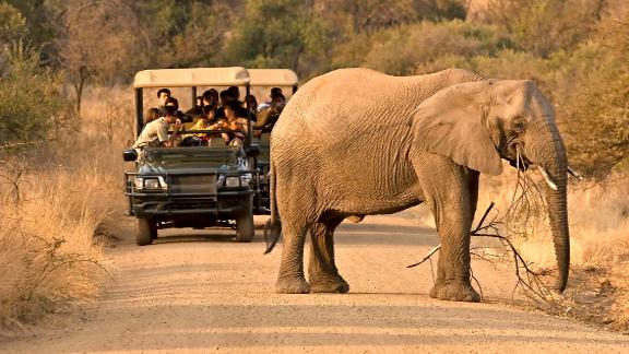Sudáfrica en safari